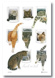 Cats Heads and Tails Tea Towel