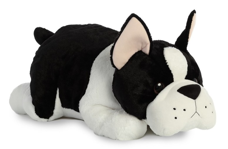 Large Boston Terrier